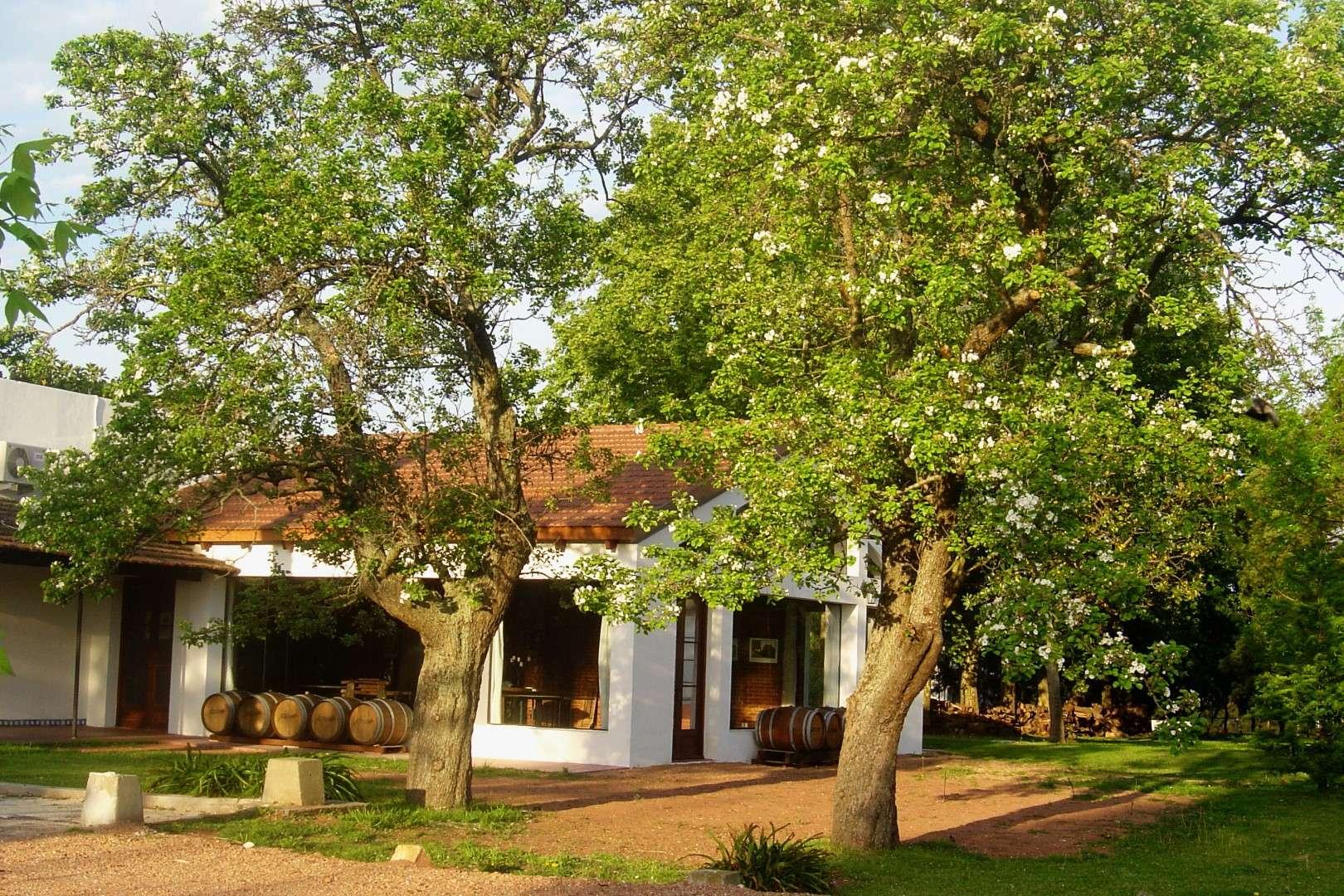 Uruguay se destaca como grande produtor de vinho