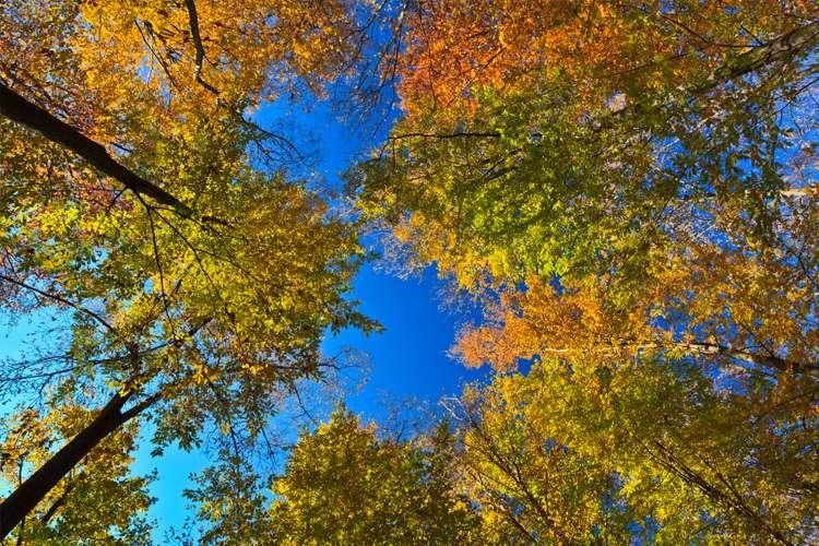7 vantagens de morar em áreas arborizadas