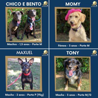 Saulo Meneghetti em campanha para adoção de cachorros