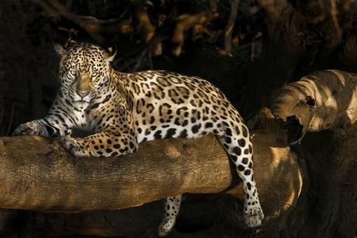 Documenta Pantanal promoverá leilão de obras de arte